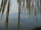 Weeping willow lakeside